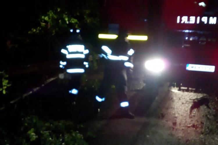 Furtuna de sâmbătă seara a doborât brazi pe drumul dintre Șomeșul Rece și Mărișel - VIDEO