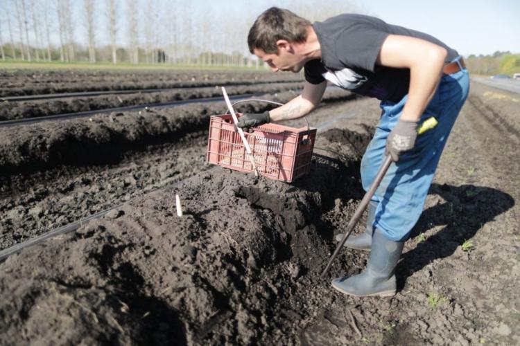 85 de muncitori români de la o fermă din Germania au coronavirus