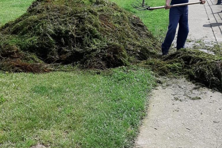 Peste 40 de tone de vegetație colectate de pe Someșul Mic și lacurile din Gheorgheni FOTO