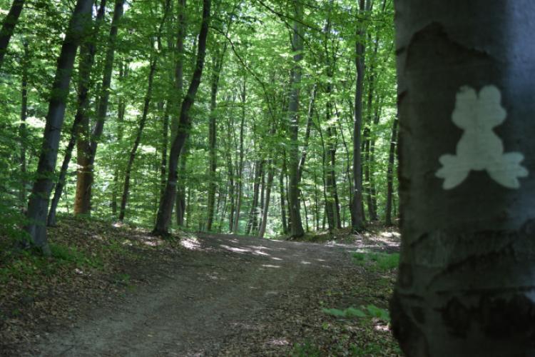 Boc: Niciun copac din pădurea Făget nu va fi tăiat. Vom face acolo un parc de 40 de hectare