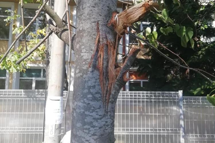 """Copacii """"măcelăriți"""" pe strada Arieșului: Domnule primar Emil Boc, ia uitați-va cum lucrează minunații muncitori - FOTO"""