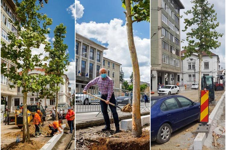 Boc a plantat copaci în Piața Păcii numai pentru poza de Facebook. După ședința foto, copacii au fost scoși - VIDEO și FOTO