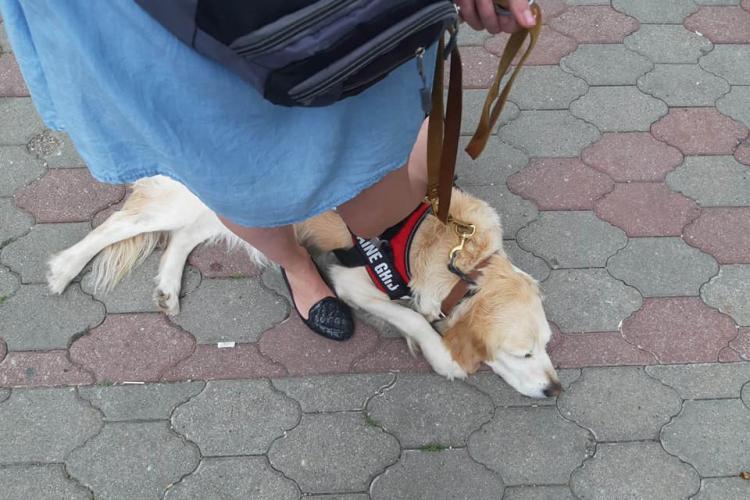 Cum s-a făcut de rușine Mega Image la Cluj! Nevăzătoare cu câinele ghid ținută la ușa magazinului, în ploaie - FOTO