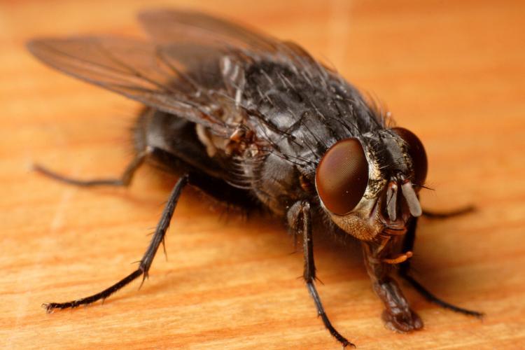 Și-a aruncat în aer jumătate de casă încercând să prindă o muscă
