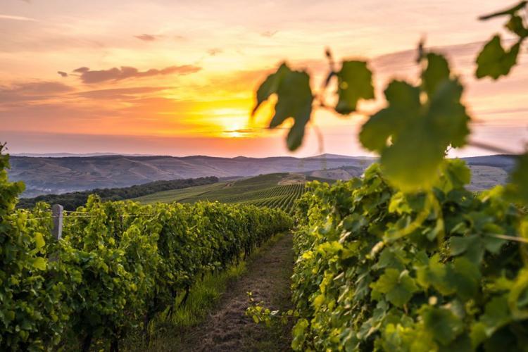 Întrebări și răspunsuri cu privire la producerea vinului de casă din mustul de Jidvei