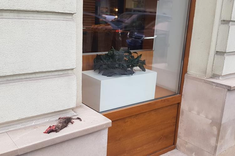 Șobolan mort pe fațada unui magazin din centrul Clujului. Nimeni nu ia măsuri - FOTO