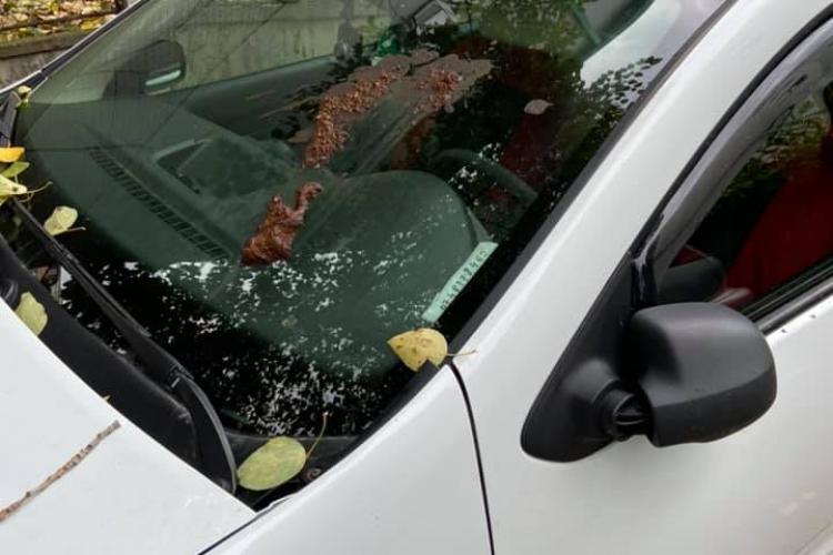 Cine ar face așa un gest? Un clujean e furios, după ce s-a ales cu mașina mânjită cu rahat - FOTO