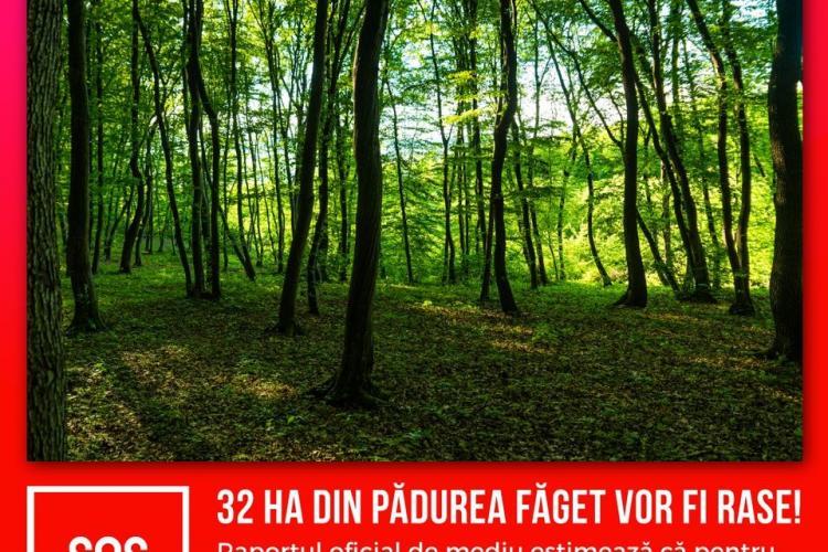 Centura Metropolitană a Clujului rade 60 de hectare de pădure. Dohotaru: Nu va ajuta la decongestionarea traficului