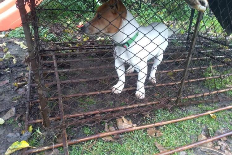 Caz halucinant în Feleacu! Un bărbat a sechestrat un câine și a cerut 250 de lei pentru a-l elibera, sumă plătită de față cu Poliția Locală