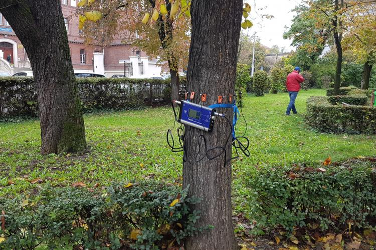 Copacii din Parcul Ștefan cel Mare sunt investigați cu un tomograf! Cei bolnavi vor fi tăiați - FOTO