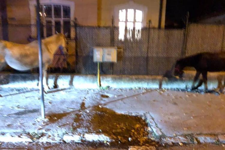Caii care au gonit prin Mărăști, prinși în cartierul Andrei Mureșanu - FOTO