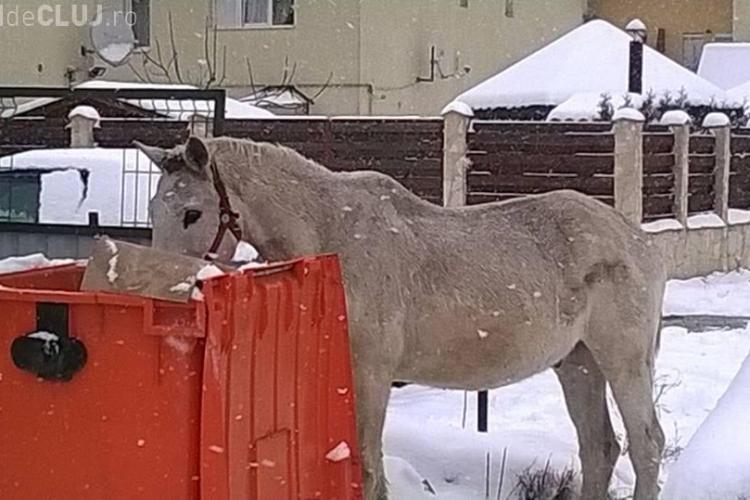 Primarul din Florești a discutat cu asociațiile de protecție a animalelor pentru a rezolva problema animalelor fără stăpân