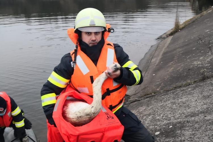 Lebădă salvată de pompierii clujeni din lacul de la Florești - FOTO