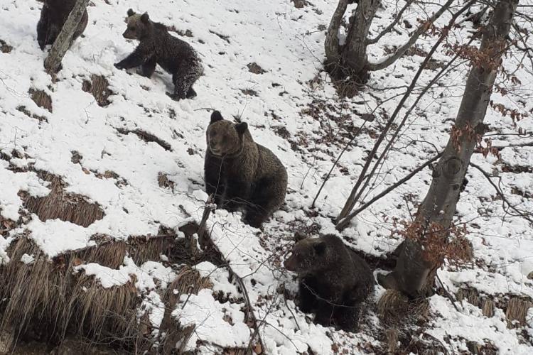 """Drumarii, """"supravegheați"""" de o familie de urși pe Transfăgărășan - FOTO"""