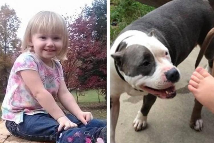 O fetiță dispărută timp de două zile s-a întors acasă teafără. Pitbull-ul ei a protejat-o zi și noapte