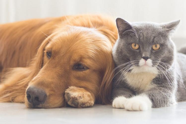 Cele mai bune animale de companie pentru apartament