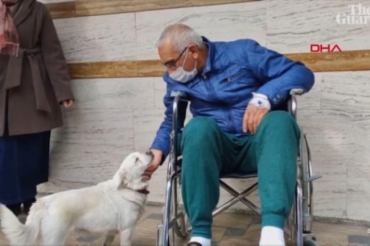 O cățelușă a așteptat zile întregi în fața unui spital în care stăpânul său era internat