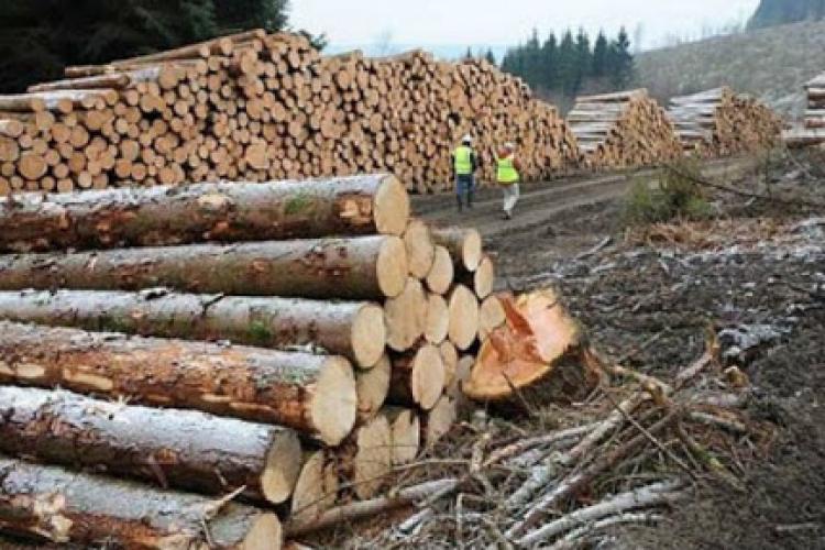 Hoți de lemne prinși la Călățele. Polițiștii le-au făcut dosare penale