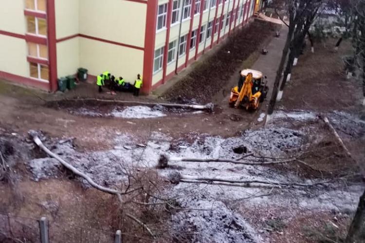 Se taie copacii de la Școala Iuliu Hațieganu din Mănăștur și Primăria Cluj-Napoca nu explică de ce - FOTO