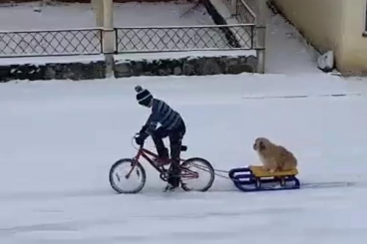 Imaginea zilei la Cluj: Un copil pe bicicleta își plimbă câinele cu sania - VIDEO