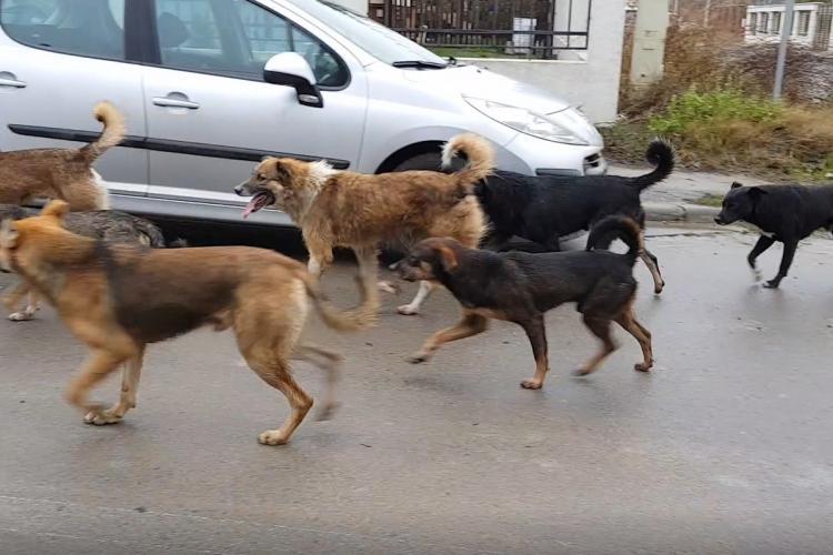 Apahida: Câinii fără stăpân vor fi capturați