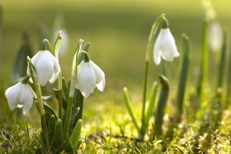 METEO. Luna martie aduce temperaturi cu mult mai ridicate decât cele normale