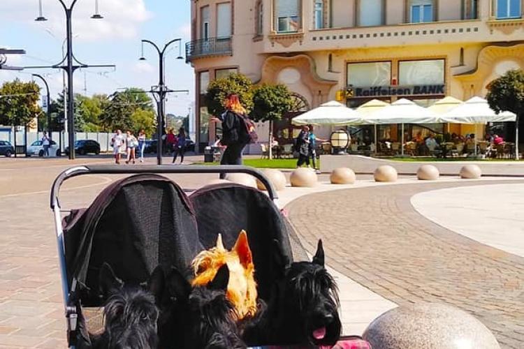 """Câini plimbați cu căruciorul ca și bebelușii, în Oradea! """"Acesta este viitorul? Imaginea e una grotescă - FOTO"""