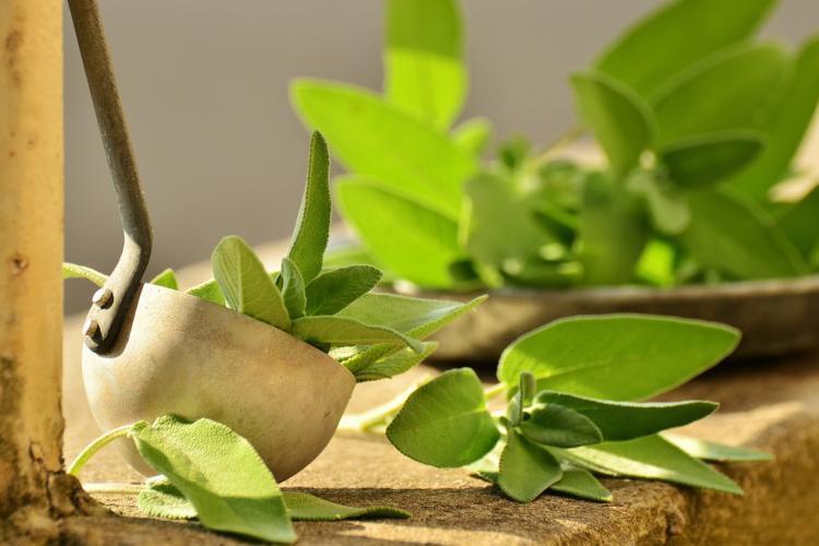 Plante pentru digestie ușoară! Ce plante îți asigură o digestie rapidă