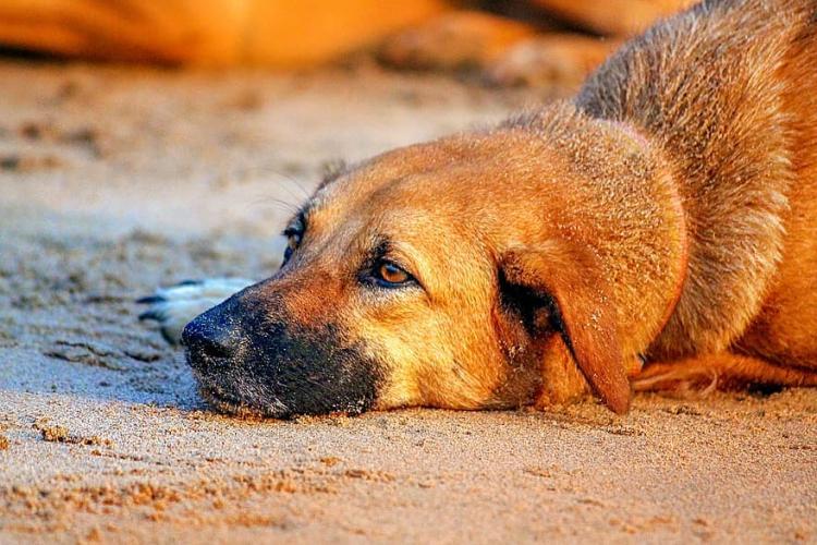 Poliția Animalelor este operațională! Cruzimea față de animale va fi pedepsită cu ÎNCHISOAREA