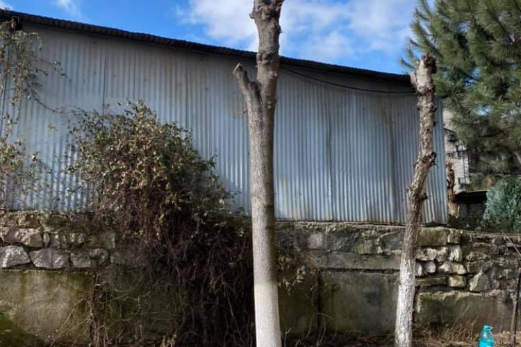 Toaletare de arbori pe strada Venus, în Gheorgheni. Mai mare bătaia de joc - FOTO
