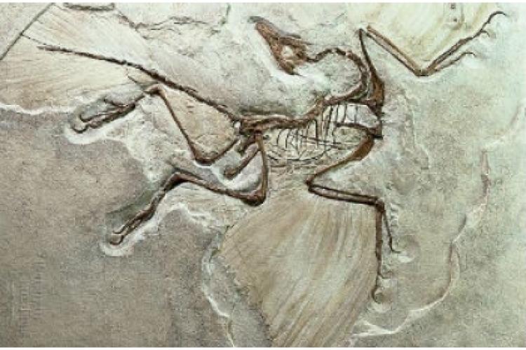 A fost redescoperit un sit unic al dinozaurilor din Transilvania