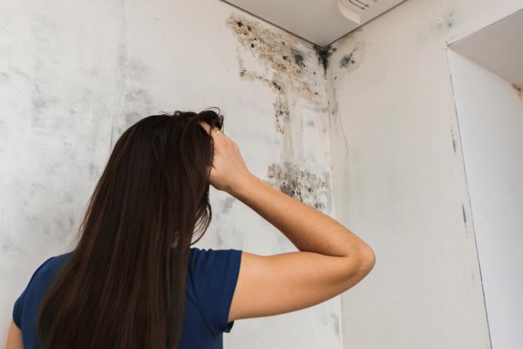 Cum poți scăpa de mucegai? 6 metode simple de curățare