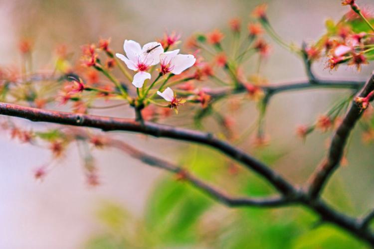 METEO. Vremea se încălzește până pe 6 martie, după care se răcește brusc!