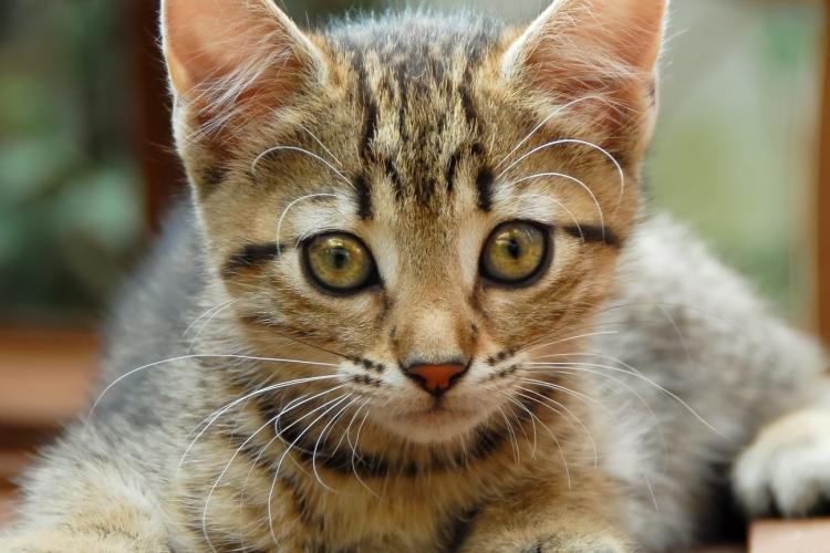 """Pisici DECAPITATE în cartierul Mănăștur: """"Cel care face așa ceva este clar psihopat"""""""