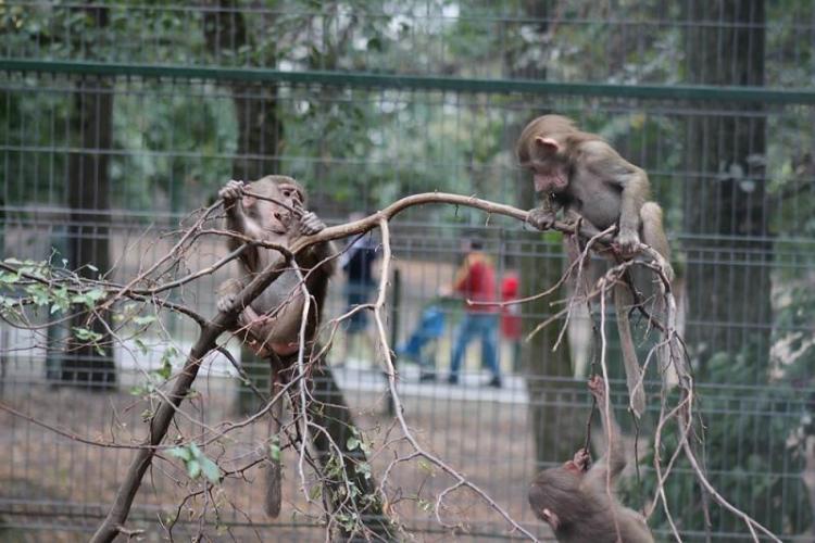 Animalele de la ZOO sunt în pericol. Proiectul PNL care ar permite ca ele să fie vândute pentru sacrificare, vânătoare și circ