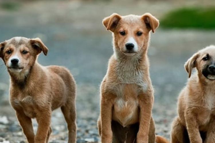 Primăria Florești va asigura sterilizarea animalelor fără stăpân