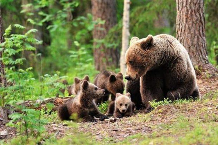 Vicepremierul Kelemen Hunor tranșează problema urșilor din România. Acum, au apărut urși și la Cluj