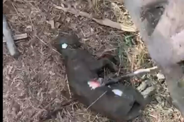 """Cluj: Alo? Poliția animalelor? S-a găsit o pisică moartă în Mărăști. """"Poliția nu vine pentru așa ceva"""""""