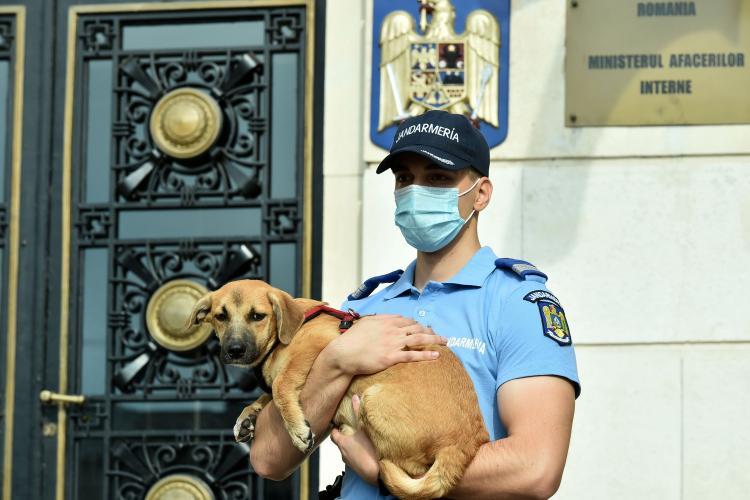 Zeci de dosare penale și sute de amenzi au fost date de Poliția Animalelor în doar 2 luni