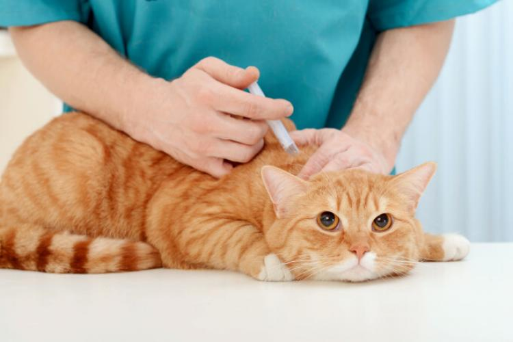 Rusia a înregistrat primul vaccin anti-Covid din lume pentru animale