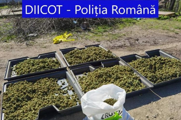 Doi soți din Spania și-au făcut o fermă uriașă de canabis într-o comuna din România - FOTO