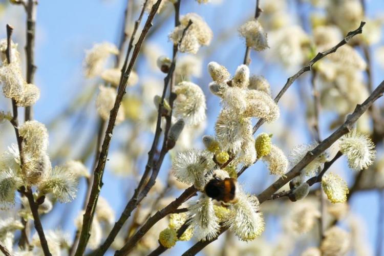 Vremea în România, de Paște și de Florii 2021. Anunțul important al meteorologilor