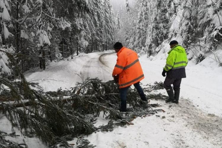 Copaci căzuți pe carosabil, pe drumuri din Apuseni. Au intervenit echipaje CNAIR - FOTO