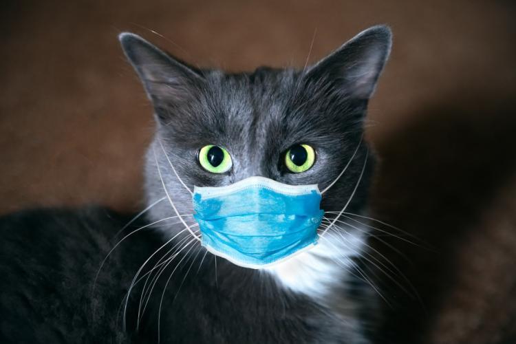 Premieră medicală. O pisică s-a infectat cu tulpina britanică a coronavirusului
