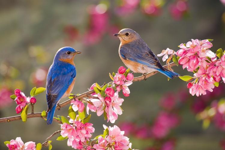 Zodiacul primăverii! Ce ZODII iubesc primăvara și căror li se potrivește teribil acest anotimp