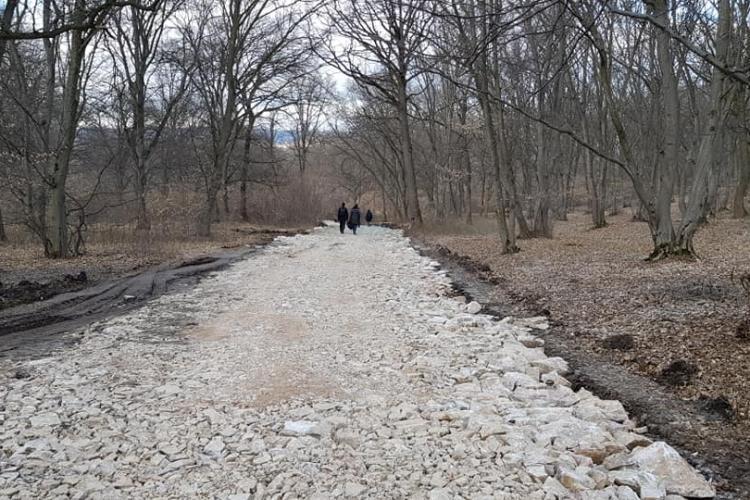 Drumul prin pădurea Hoia a fost amenajat pentru ca Salanță să aibă drum spre șantierul blocurilor - FOTO