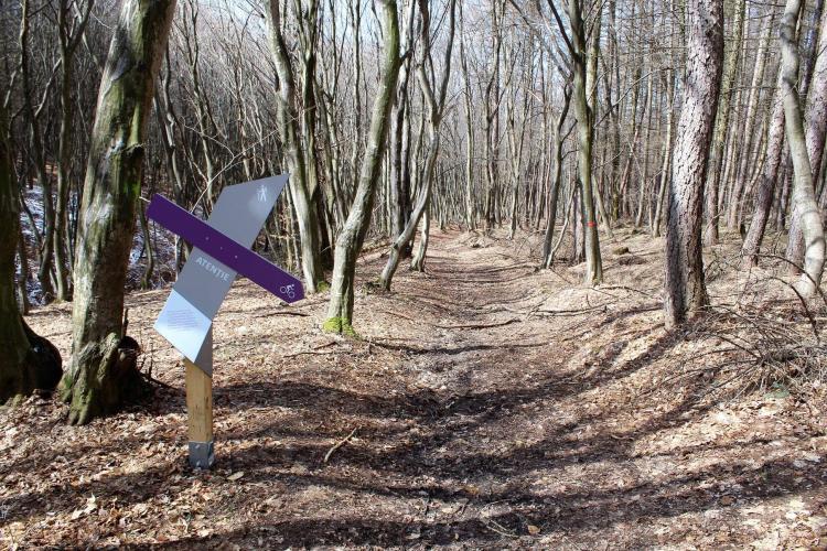 Aleile din Pădurea-parc Făget, marcate, iar zonele importante au descrieri - FOTO