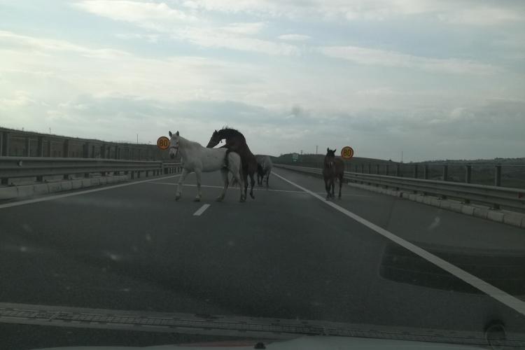 Cai pe Autostrada Transilvania, pe sensul Turda - Gilău. La un caz de un accident violent - FOTO