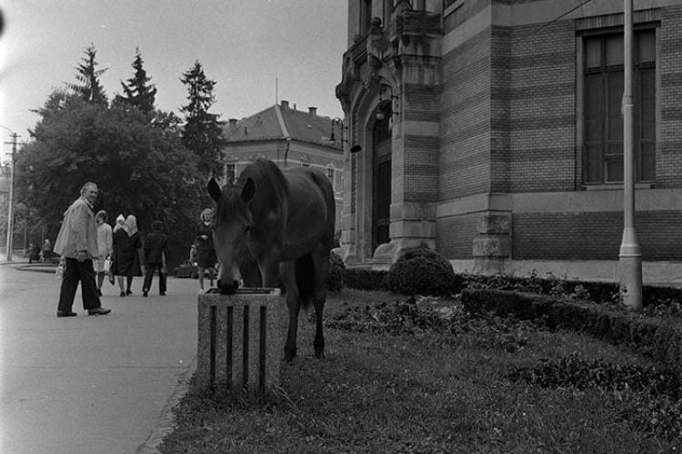 Un cal păștea florile din Piața Păcii, lângă BCU. Clujul și … animalele - Galerie FOTO