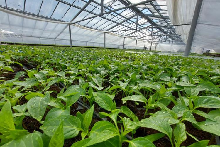 USAMV Cluj vinde peste 90.000 de răsaduri de legume produse la Cluj. Cumpără produse de Cluj - FOTO